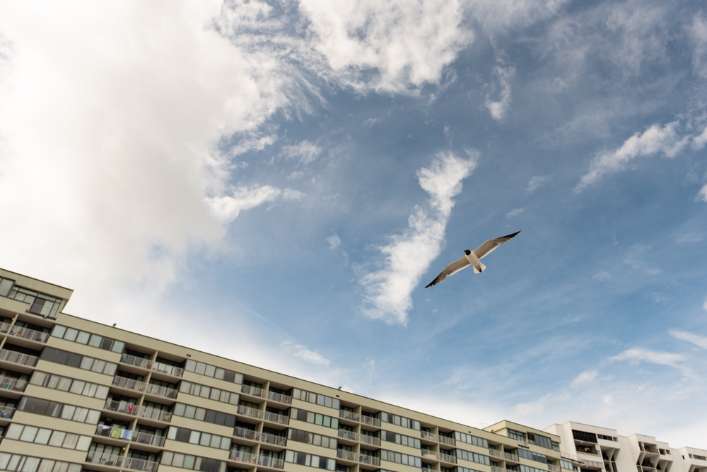 Seagull at Myrtle Beach