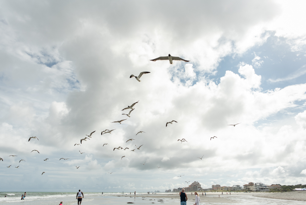 Seagulls at Myrtle Beach